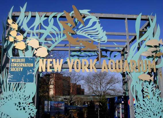 new york things to do for kids