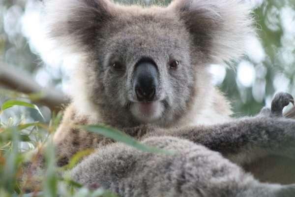 Phillip Island attractions in melbourne