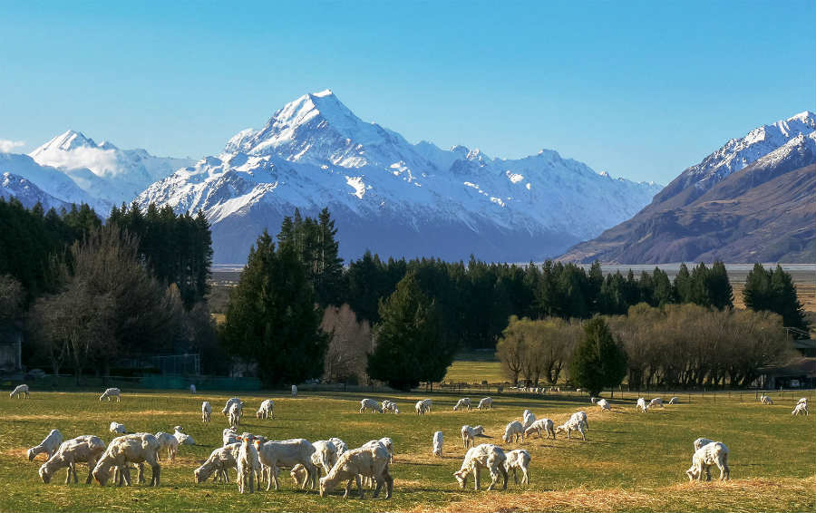 Exciting Places to Visit by Car on New Zealand's North Island