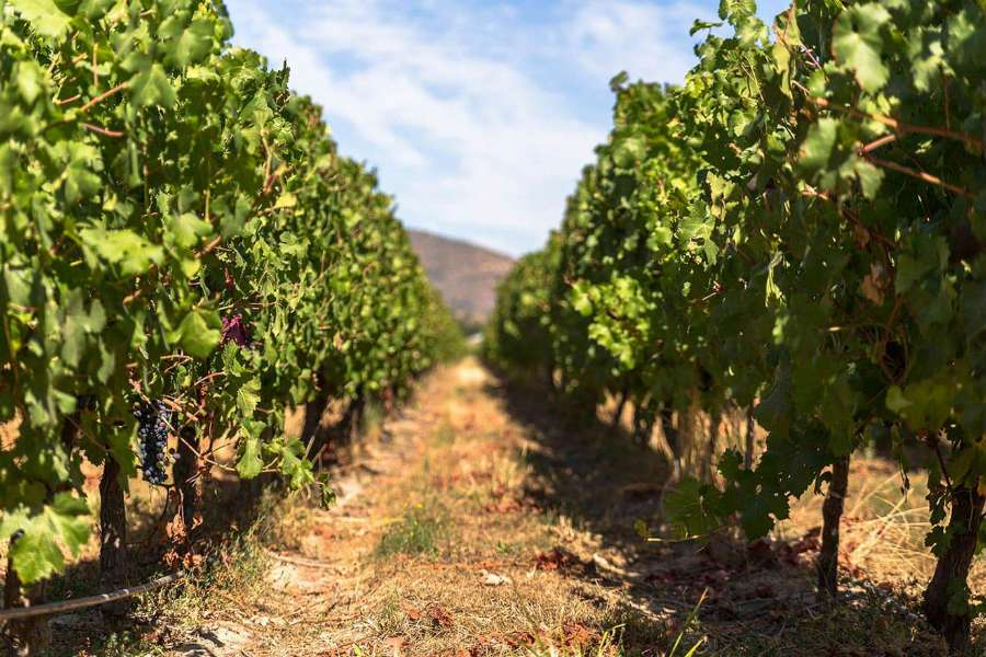 Wine tasting in the Colchagua Valley