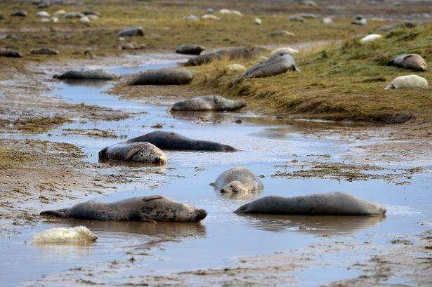 donna nook seals viewing area
