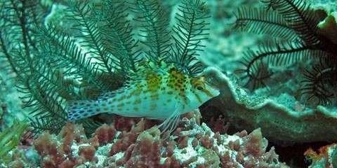 Top Underwater Photography destinations