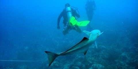 best underwater photography destinations